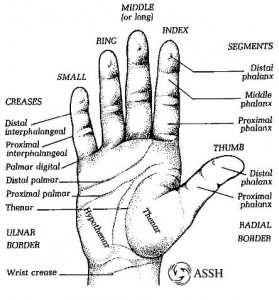drawing of hand