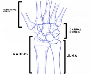 anatomy of wrist bones
